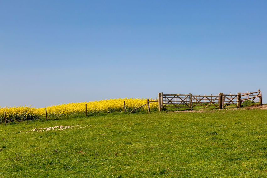 A scenic view of a South Downs Landscape on a sunny spring day South Downs Barrier Beauty In Nature Boundary Clear Sky Copy Space Environment Fence Field Grass Land Landscape Nature No People Non-urban Scene Outdoors Plant Rural Scene Scenics - Nature Sky Sussex Tranquil Scene Tranquility