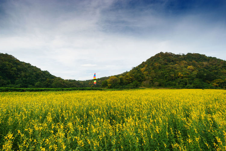 Plant Beauty In Nature Sky Land Field Landscape Cloud - Sky Scenics - Nature Tranquil Scene Agriculture Rural Scene Environment Tranquility Growth Yellow Nature Flower Tree Day Farm No People Outdoors Yellow Flower