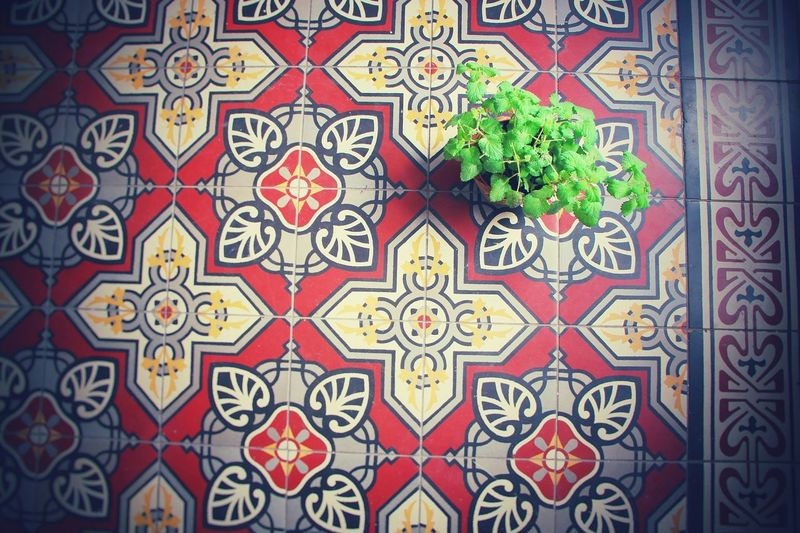 Love💗 Plants Floor Arabic Floor Sunlight Butiful Nature Peace And Quiet Colors Your Design Story Home Is Where The Art Is
