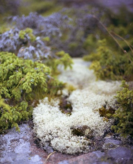 Aland Islands Analogue Photography Analogueisnotdead Baltic Sea Beauty In Nature Close-up Day Filmisnotdead Finnland Flowers Green Growth Island Mamiya MAMIYA645 Medium Format Nature No People Outdoors Plants Plants And Water Rocks Rocks And Water Water Yellow