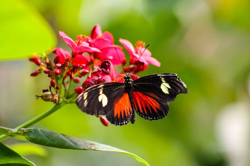 Schmetterling Butterfly - Insect Zoo Animals In The Wild Fotografia Fokus Tiere Insect Nature Butterfly Flower First Eyeem Photo