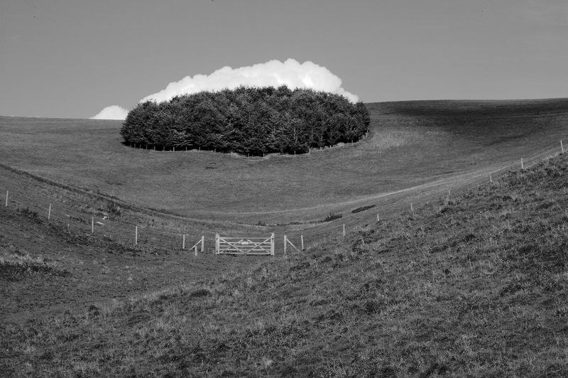 Lurking Cloud Black & White Gate Lurking Cloud Swanmore Lake Beauty In Nature Blackandwhite Day Field Grass Landscape Nature No People Outdoors Scenics Stand Of Trees Tranquil Scene Tranquility Tree