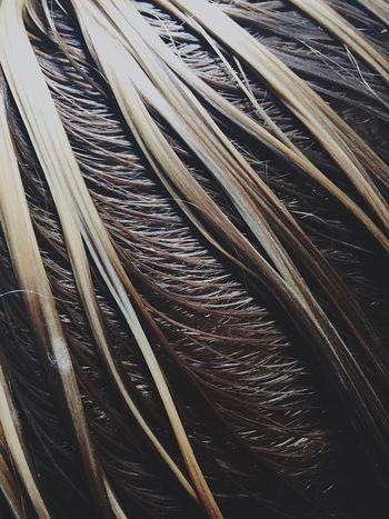 Hair Wet Hairdresser Wethair  Color Haircolor