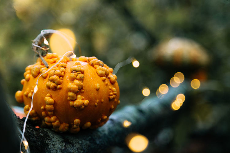 Close-Up Of Pumpkin On Illuminated Tree During Halloween