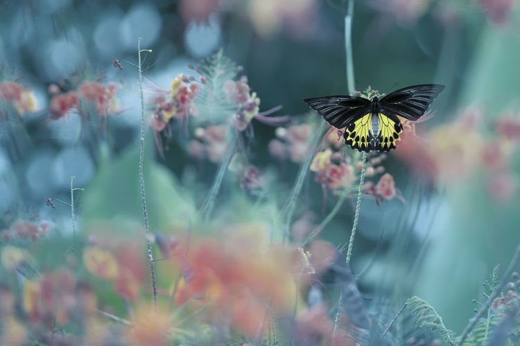 Black and yellow butterfly. Animal Themes Animal Wildlife Animals In The Wild Beauty In Nature Blooming Butterfly - Insect Close-up Day Flower Flower Head Focus On Foreground Fragility Freshness Growth Insect Nature No People One Animal Outdoors Petal Plant Pollination