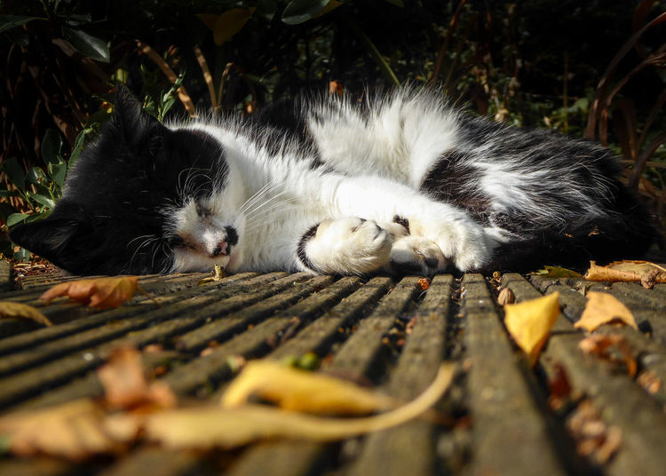 Autumn Animal Animal Themes Cat Close-up Domestic Domestic Animals Domestic Cat Feline Leaf Leaves Lying Down Mammal No People One Animal Pets Plant Part Relaxation Resting Selective Focus Sleeping Surface Level Vertebrate Whisker Wood - Material
