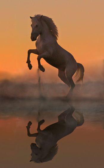 View of horse in sea during sunset