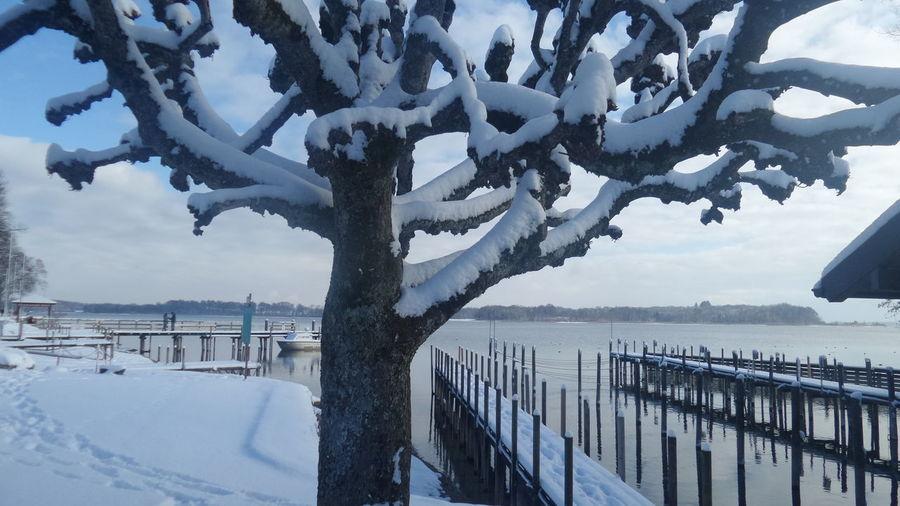 Winterlandschaft tree snow Chiemsee Zauberhaft No People