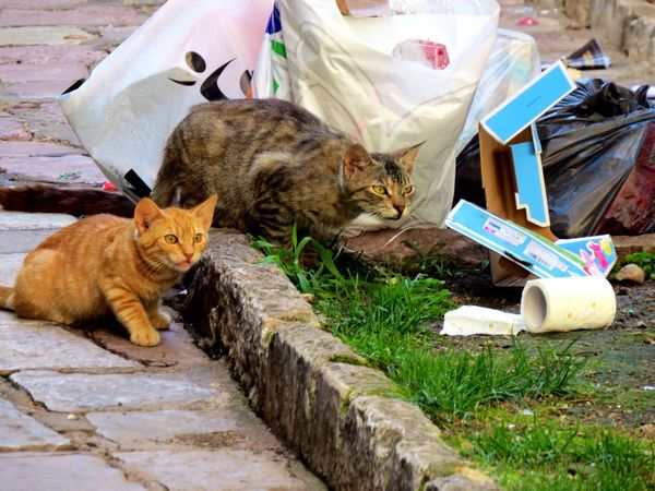Cats Montenegro Animals Photography Taking Photos Holiday Action Ginger