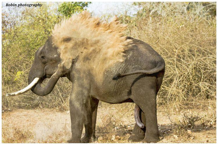 Elephant south