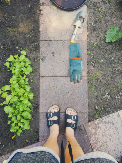 Accidentally left garden gloves on the ground; got quite wet after hosing the veggie garden. Gardening Herb Oops Plants Sandal Equipment Garden Gloves High Angle View Human Leg Lifestyles One Person Outdoors People Personal Perspective Standing Veggie Garden Wet