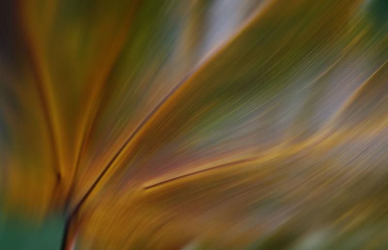 Full frame shot of blue orange flower