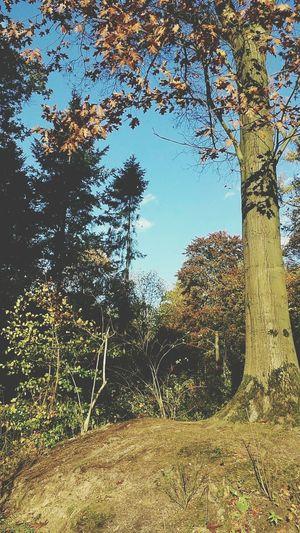 Taka a good walk Sunday Lovely