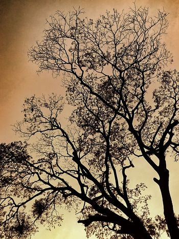 Yellow Color Yellow Tones Tree Beauty Of Nature Nature Silhouette Sky