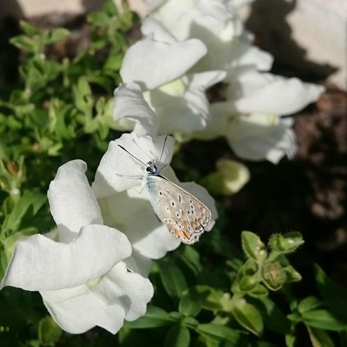 Butterfly Flowers EyeEm Nature Lover