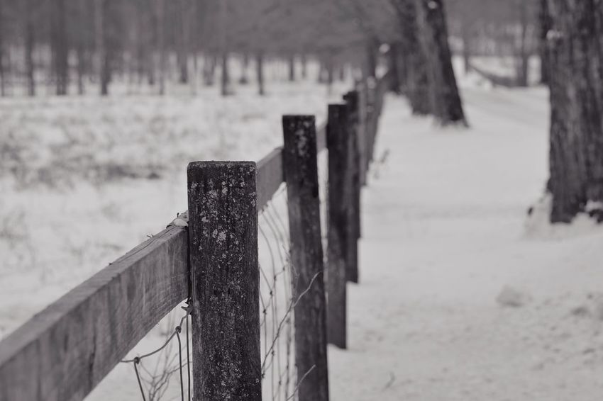 1/3 Close-up Cold Temperature Day Fence Focus On Foreground Nature No People Outdoors Snow Tranquility Tree Water Winter