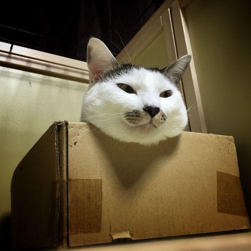 A severed head. Cat Fake