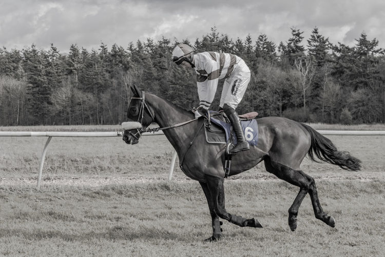 Cantering to the starting line of a point to point race Cantering  Horse Horse Photography  Horse Racing Animal Themes Animal Domestic Animals Working Animal Riding Racing Point To Point Point To Point Racing Point To Pointing Starting Line