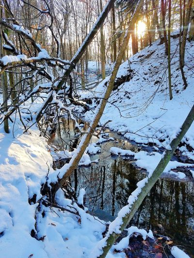 Snow And Water Woods Nature Winter Tree Full Frame Outdoors Day Branch Beauty In Nature Backgrounds Cold Temperature
