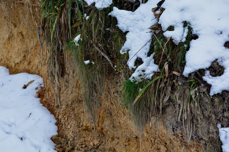 Abhand Grass Lehm Schnee Boden Erde Snow