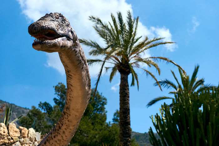 Algar, Spain - April 8, 2017: Realistic model of a Amphicoelias dinosaur in the Dino Park of Algar. It is a unique entertainment and educational park. Spain älgar Amphicoelias Dino DinoPark Dinosaur Monster SPAIN Spikes Amusement Park Animal Animal Themes Animal Wildlife Day Dino Park Entertainment Park Extinction Animals Herbivorous Long Neck  No People Nobody Outdoors Realistic Sky Snout Sunny Day