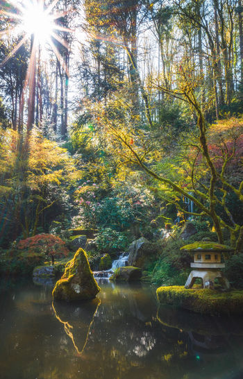 beauty Japanese Garden Stone Lantern Sunburst Beauty In Nature Day Forest Growth Land Lens Flare Nature No People Outdoors Plant Reflection Sunbeam Sunlight Tranquil Scene Tranquility Tree Water