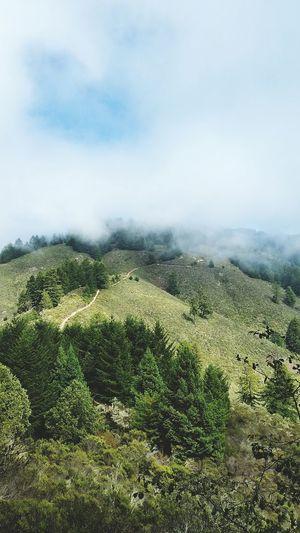Fog Bay Area Santacruzmountains