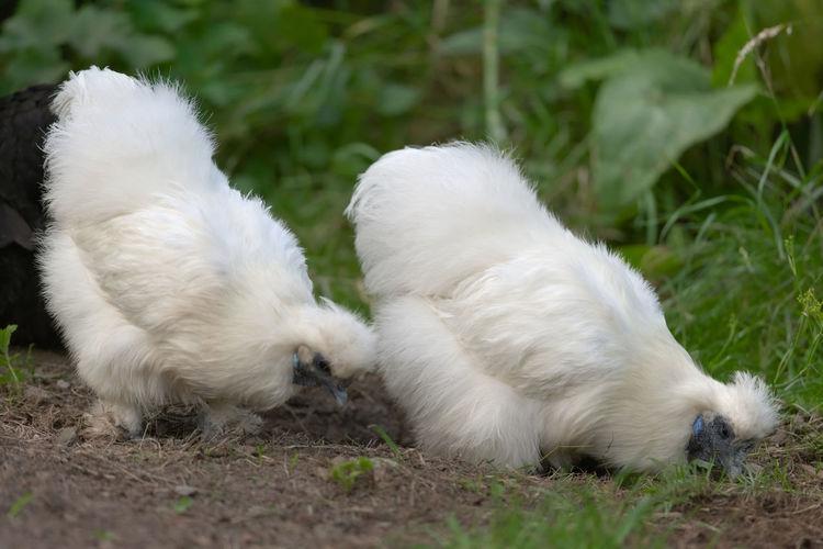 White dog lying on land