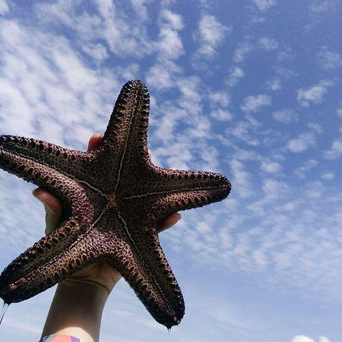 Starfish in the sky.. Starfish  One Animal Nature Sea Life Sky Animal Themes Creaturefromthesea Seafish Creature Unusual
