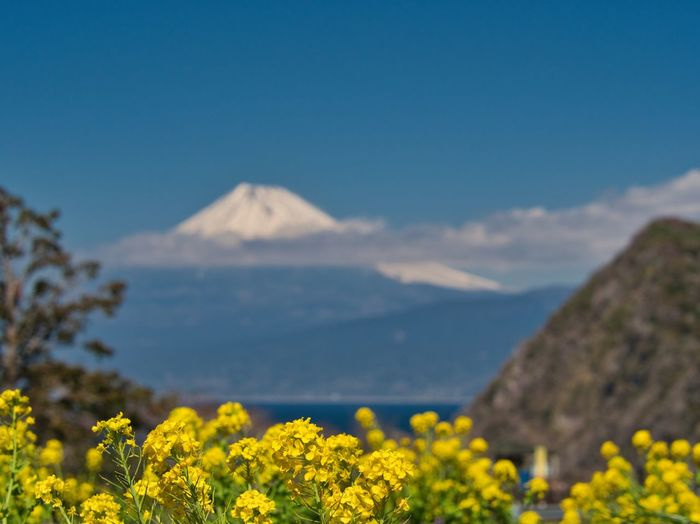 Mt Fuji over