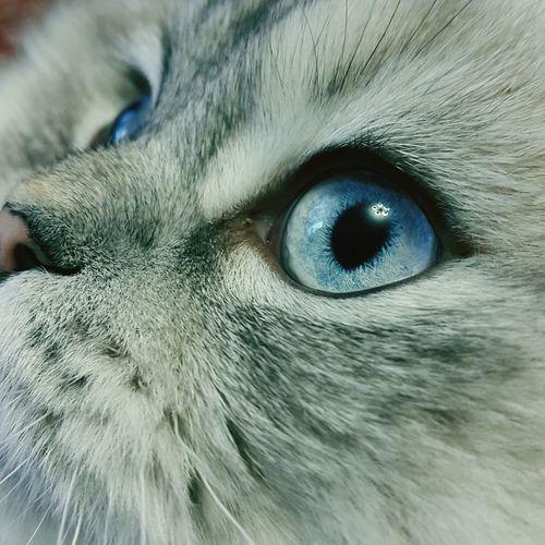 Pets Corner Ma Cat...his Name...Gess
