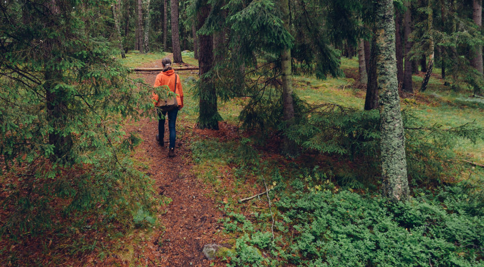Woman in lush forest walking on path uphill Casual Clothing Forest Green Color Leisure Activity Lifestyles Lush Foliage Nature Non-urban Scene Orange Outdoors Pathway The Way Forward Tranquility Walk Woman