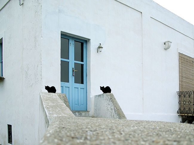Architecture Closed Door Entrance House Wall Wall - Building Feature Window Stromboli Eolie Islands Eolian Islands Mediterranean Sea Architectures Cat Lovers Black Cat Black Cats