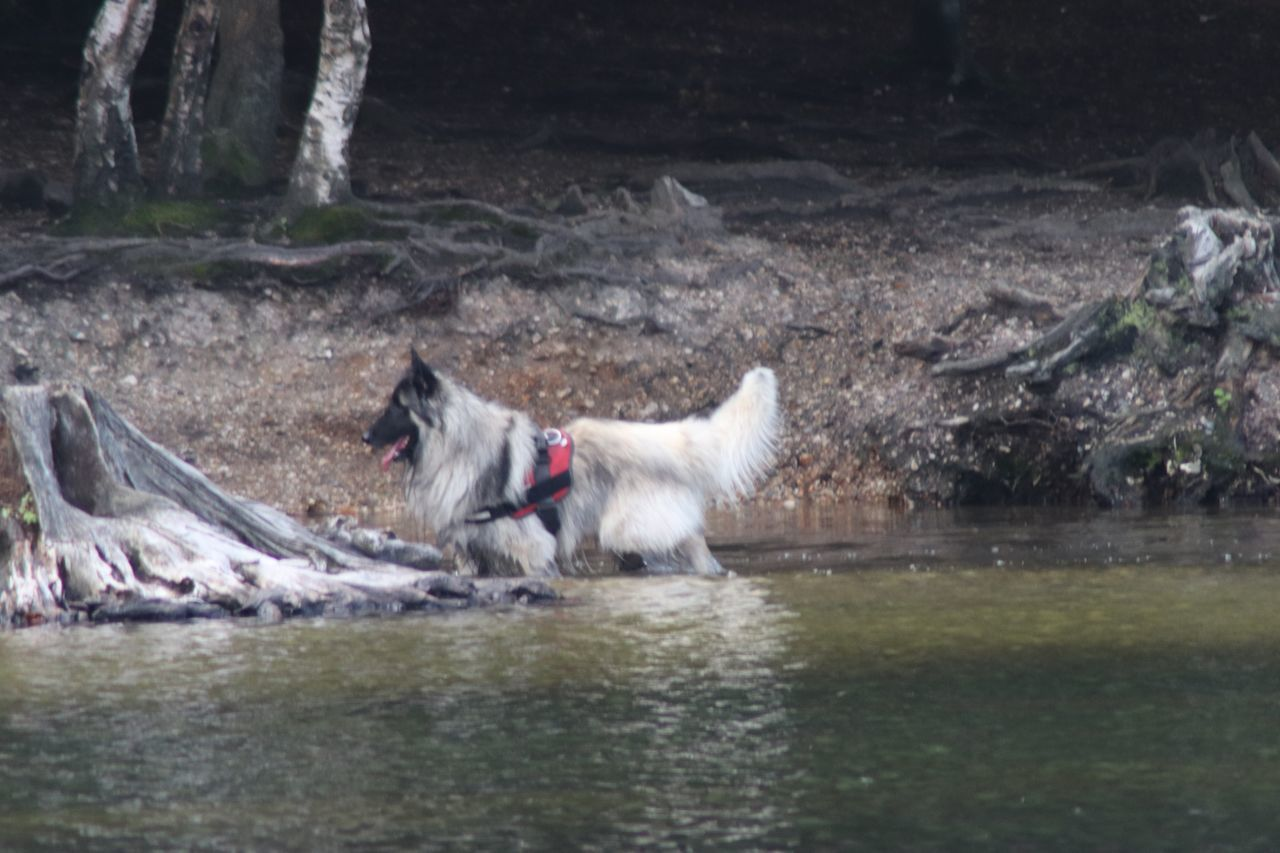 animal, animal themes, mammal, one animal, pets, domestic, domestic animals, water, vertebrate, dog, canine, motion, nature, day, lake, animal wildlife, waterfront, no people, blurred motion, flowing water