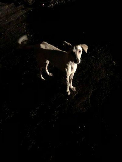 Suyashclicks EyeEmNewHerе Mammal One Animal Animal Animal Themes Domestic Animals Domestic Pets Dog No People Canine