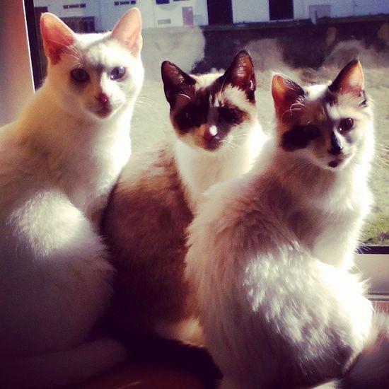 Kokasthecat Cookiethecat Pantufathecat We are Catorhead and we play rock n roll!!! Catlovers Catsagram Cat