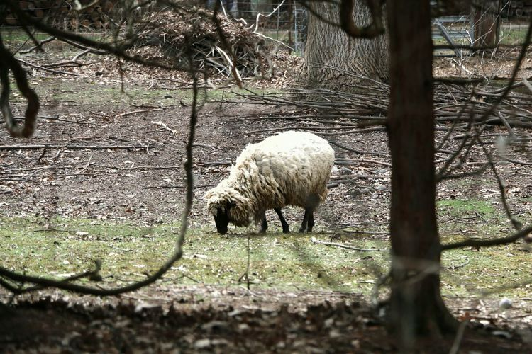 Sheep Beautiful Great Views Countryside Cold Spring Indiana Spring Green Check This Out In The Woods