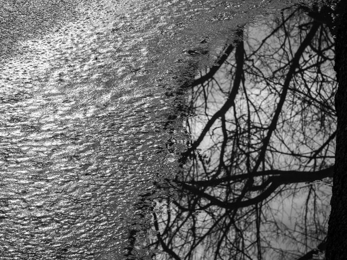 High angle view of bare trees by sea