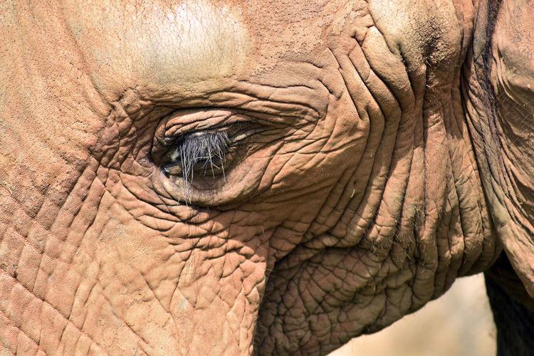 Elephant Wild