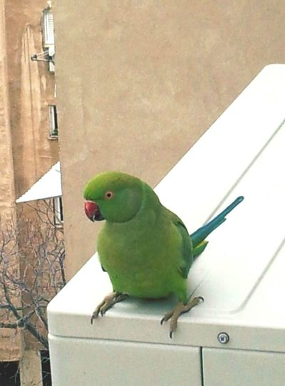 Look what visited me while i was cleaning the window.. say hello to my new friend!
