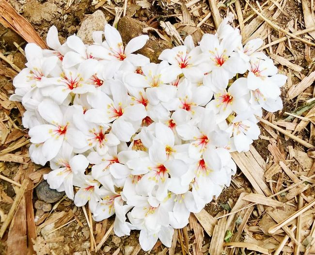 Nature Growth Flower Beauty In Nature White Color Love Flower Head Fragility Plant Blossom Springtime Petal Freshness No People Outdoors Day Close-up EyeEmbestshots EyeEm Best Shots Life EyeEm Best Shots - Nature EyeEm Nature Lover Traveling The World Traveling Beautiful