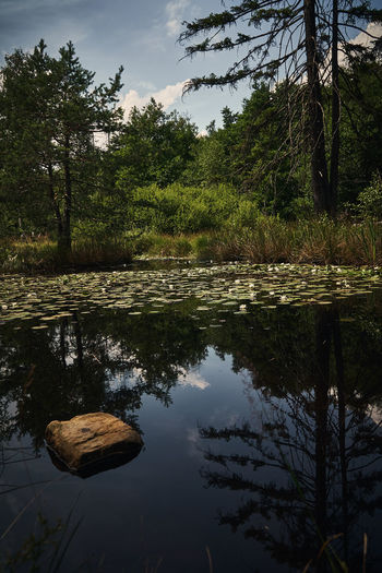 Small Lake with water lillies 2 Beauty In Nature Day Forest Growth Lake Nature No People Outdoors Plant Reflection Scenics - Nature Sky Tranquil Scene Tranquility Tree Water Water Lily Waterfront