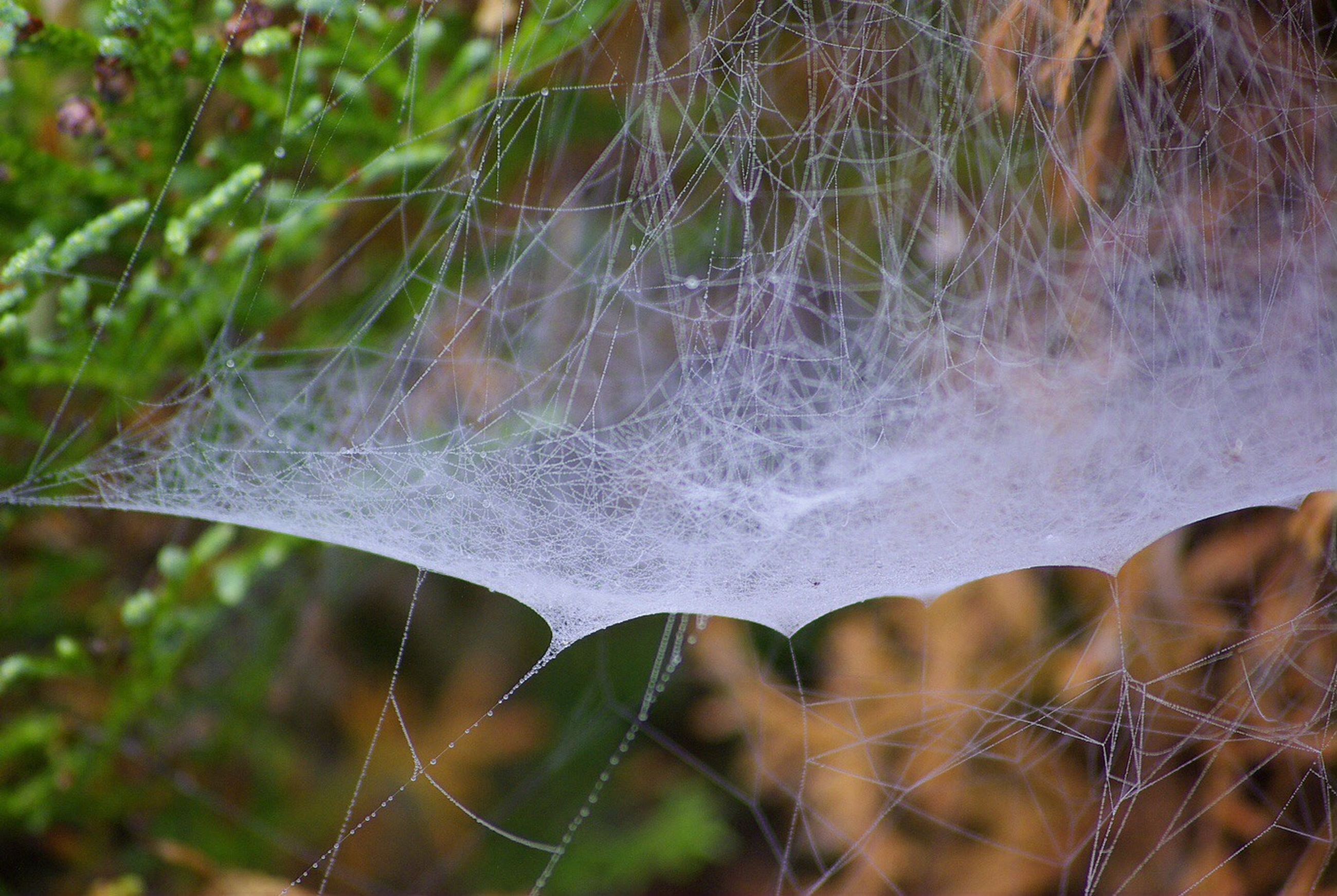 spider web, close-up, water, focus on foreground, drop, plant, nature, fragility, wet, selective focus, growth, beauty in nature, day, outdoors, grass, no people, dew, tranquility, natural pattern, freshness