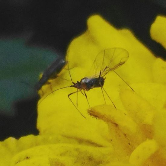 Photo Macrophotography Macro Phone Asuszenfone Nature Beautifully  Yellow Spring макросъемка весна букашки