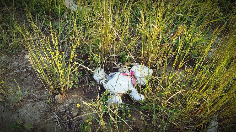 Freshness Fragility Beauty In Nature No People High Angle View Close-up Outdoors Nature Growth Field Grass Lost Toy Forgotten Things