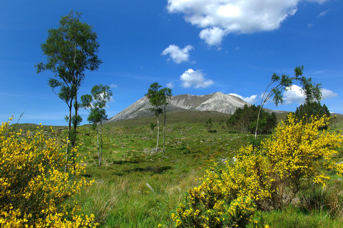 Beinn Eighe Beauty In Nature Beinn Eighe Climbing Day Flower Freshness Growth Landscape Low Angle View Mountain Nature Nature Reserve No People Outdoors Plant Scenics Sky Torridon Mountains Tourism Destination Tranquil Scene Tranquility Tree Walking Wester-ross