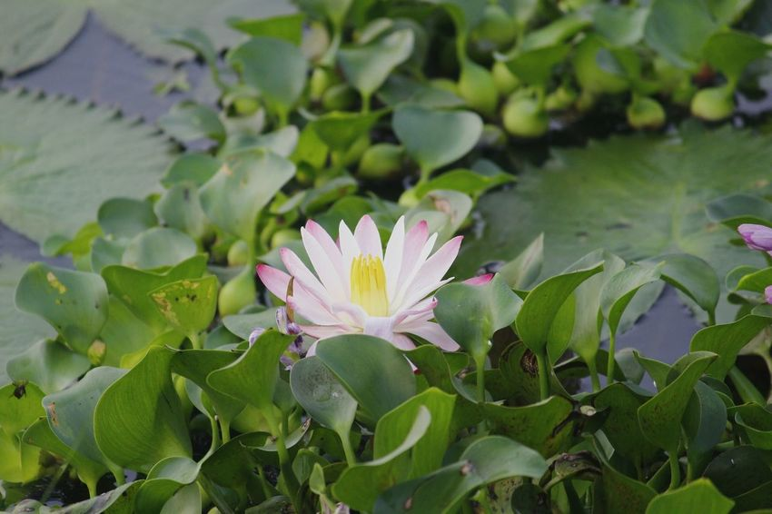 Flower Flower Beauty In Nature Water Green Color