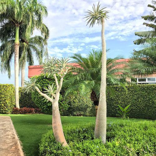Plant Tree Palm