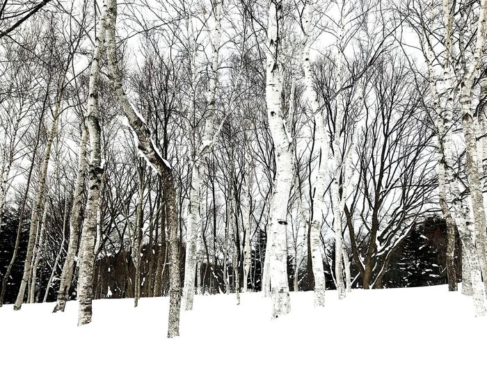 Winter Snow Cold Temperature Bare Tree Nature Tree Beauty In Nature