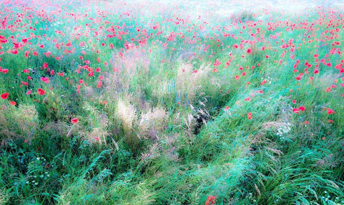 Landscape Flowers Nature